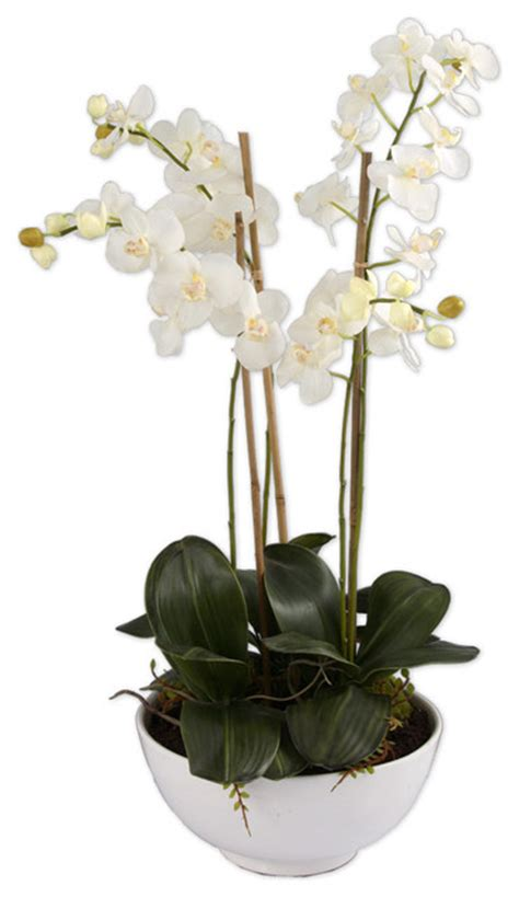Orchids Pots Planters by 60036 Clair Blanc Orchid Planter By Uttermost Modern Indoor Pots And Planters Los Angeles