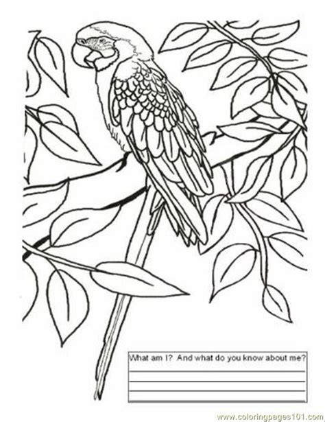 coloring page map of brazil free coloring pages of flag of brazil