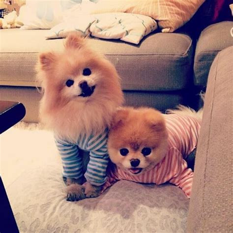 instagram dog 10 cute animal instagram accounts to follow my10online