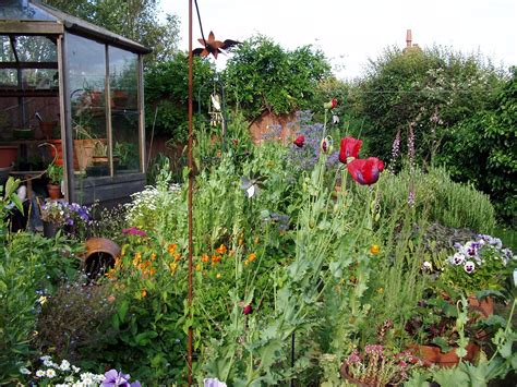 wildflower backyard letticeleaf my wildflower garden