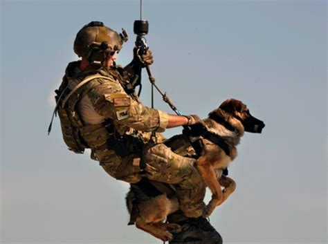 army dogs 10 things you may not about dogs barkpost