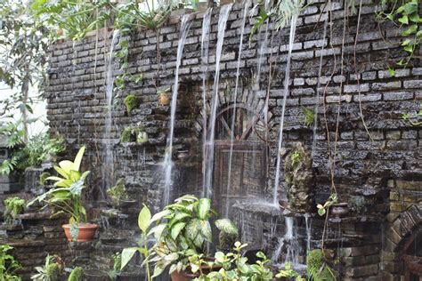gratis afbeeldingen oerwoud achtererf stenen muur