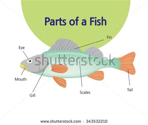 Parts Of A by Animal Parts Clipart 26