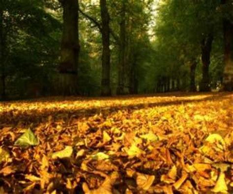 download wallpaper daun jatuh aspen daun musim gugur wallpaper alam alam wallpaper