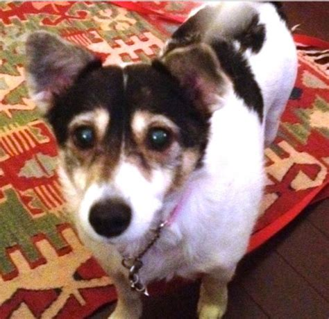 molly seeks a forever home oasis animal rescue and