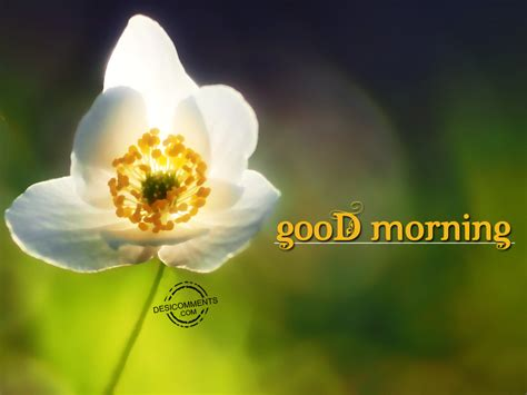 good morning images con good morning pictures images graphics for facebook