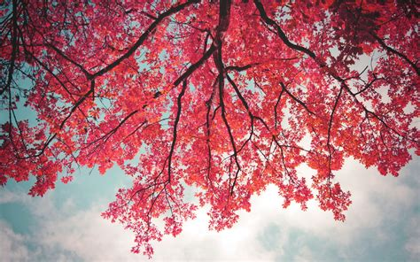 wallpaper pink leaves pink leaves in tree branch wallpapers 1680x1050 1171144