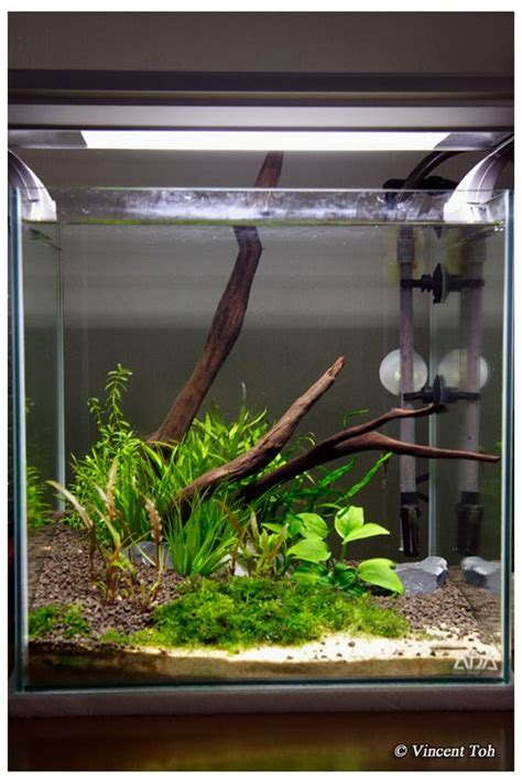 Co2 Package Aquascape 7 1ft cube non co2 planted aquascape page 3 fish