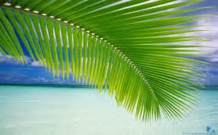 beach palm green leaf beach wallpapers