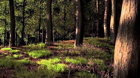 imagenes 3d bosques bosque 3d breakdown por saul fernandez youtube