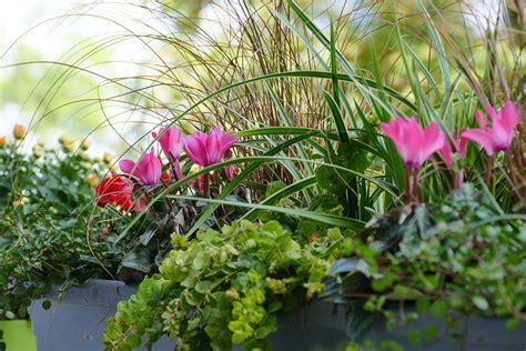 Winterbepflanzung F R Balkonk Sten Und K Bel Garten 5400 by Herbst Winterbepflanzung Blumenkasten Balkonpflanzen 1460
