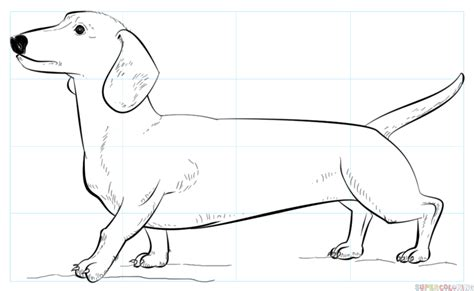 weiner dog coloring page how to draw a dachshund step by step drawing tutorials