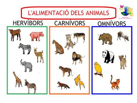 imagenes animales carnivoros herviboros omnivoros cuadros comparativos de animales carn 237 voros y herb 237 voros