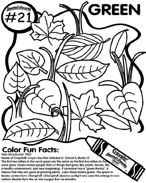 anole lizard coloring page green anole page coloring pages