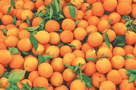 cold storage new year oranges lack of cold storage hurting farmers in east money the
