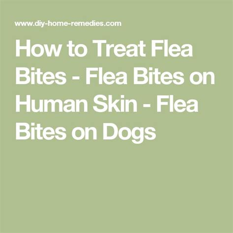 how to treat fleas on dogs how to treat flea bites flea bites on human skin flea bites on dogs diy