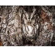 Owl Animals Camouflage Trees Birds Wallpapers HD