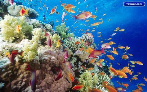 free wallpaper under the sea under sea wallpaper wallpapersafari