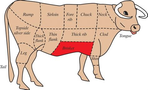cow cuts diagram diagram of how to butcher a beef cow hubpages