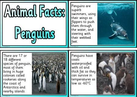 fact card template ks1 instant display teaching resources animal facts cards