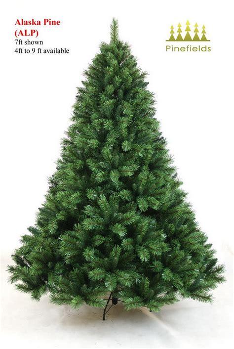 kiefer weihnachtsbaum china tree alaska pine alp china