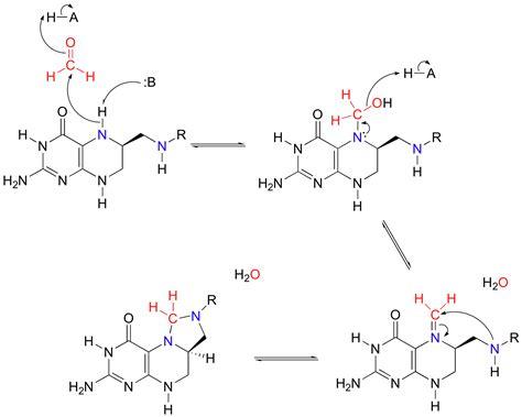 pattern formation mechanisms 11 6 imine schiff base formation chemistry libretexts