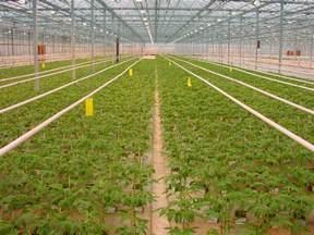 organic house greenhouse wikidwelling fandom powered by wikia