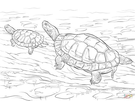 snapping turtle coloring pages rockthestockreviews co