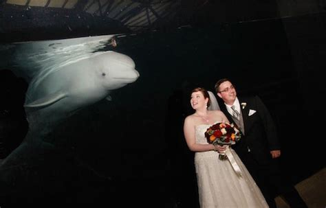 10 Reasons Why Our Wedding Rocked by 10 Reasons Why My Wedding At The Mystic Aquarium Rocked