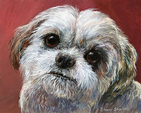 shih tzu painting shih tzu shih tzu prints posters framed more breeds picture