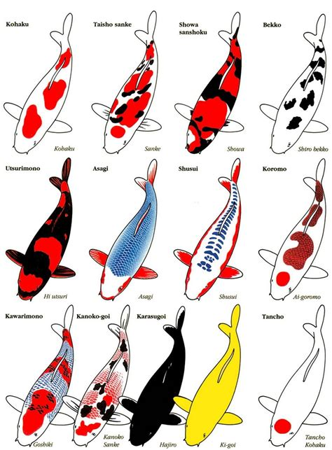 koi fish color meaning chart slighted koi pond and chart