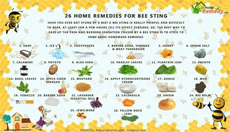 26 home remedies for bee sting home remedies