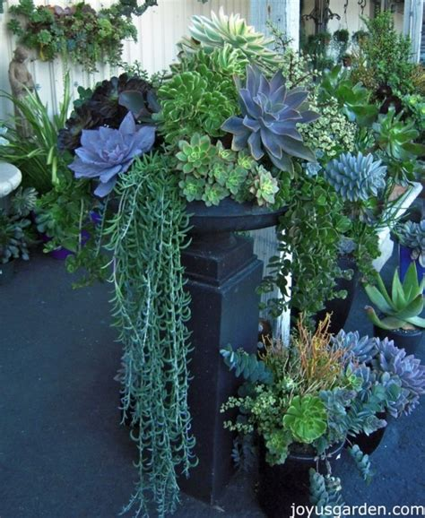 draping plants draping greenery 43 outstanding succulent gardens you can create