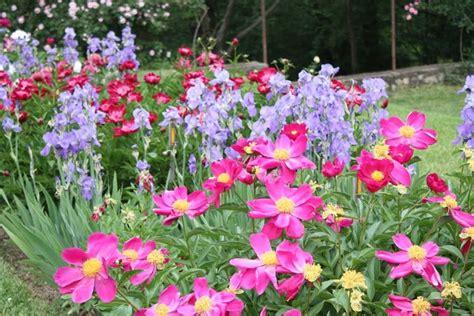 piante da giardino perenni piante perenni piante da giardino piante perenni arbusti