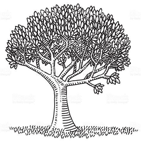 scribbled tree symbol stock vector art more images of nature symbol deciduous tree drawing stock vector art
