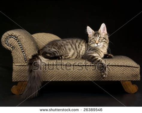Cat Chaise Lounge cat chaise lounge cats and other animals