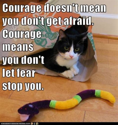Courage Memes - growth mindset resources courage means you don t let fear