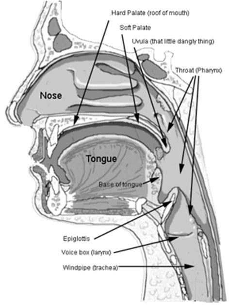 throat diagram labeled sleep apnea turn the lights