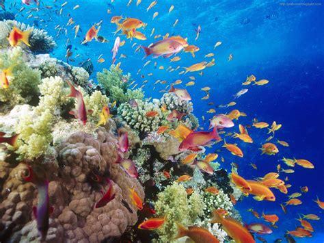 sea fish wallpaper beautiful fish