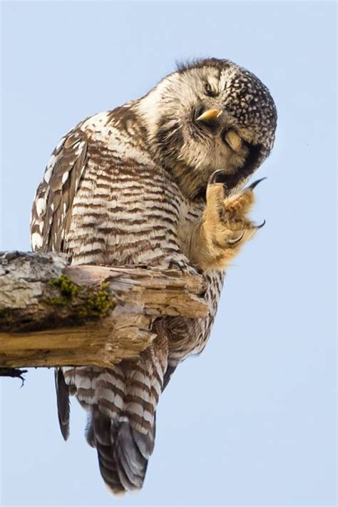 Owl Hello best 10 baby owls ideas on baby owl