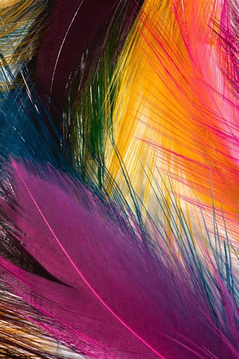 colorful feather colorful feather backgrounds for www imgkid