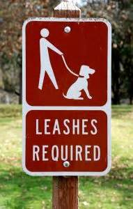 how to get a puppy to walk on a leash how to get a to stop grabbing the leash on a walk
