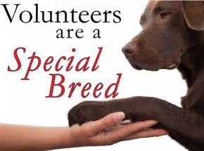 volunteers needed read how you benefit too spca