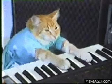 Cat Playing Piano Meme - charlie schmidt s keyboard cat the original on make a gif