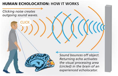 Echolocation Blind the blind individuals who see by sound discovermagazine
