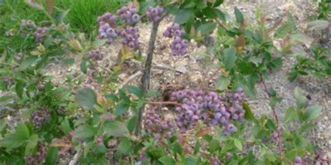 vylet zlin tip na v 253 let borůvkov 225 farma v okrese zl 237 n