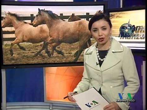 mustanglar yovvoiy otlar/american horses youtube