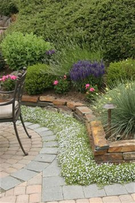 Patio Ground Cover Ideas by 1000 Images About Ground Covers On Sedum