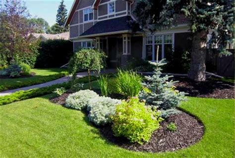 top  evergreen trees  diy landscaping