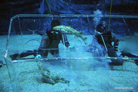Lu Aquarium 2015 shark awareness day marked in beijing aquarium xinhua